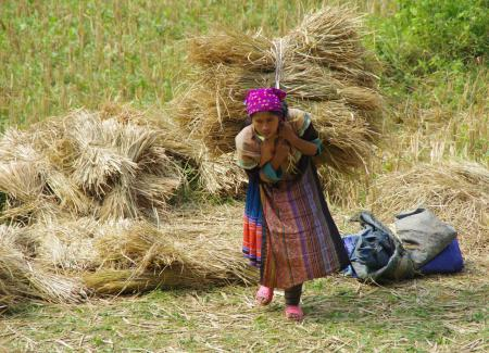 Tüdruk põllul heina vedamas